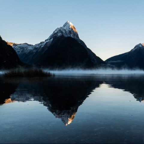 Grey Wolf in New Zealand a favoured destination