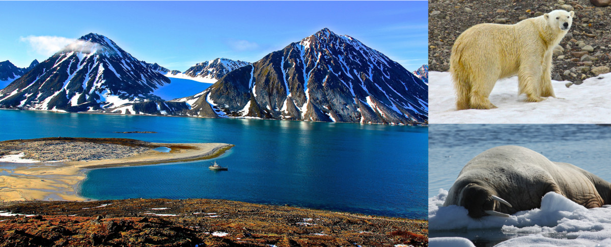 Svalbard cruise, Polar bears, Walruses, FPB78 Grey Wolf